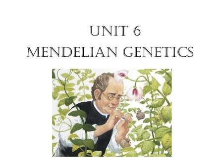 Unit 6 Mendelian Genetics. Section 10.1 Summary – pages 253-262 Gregor Mendel - Mid-nineteenth century Austrian monk who carried out important studies.