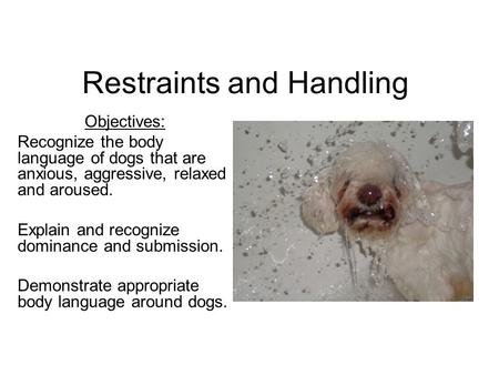 Restraints and Handling Objectives: Recognize the body language of dogs that are anxious, aggressive, relaxed and aroused. Explain and recognize dominance.