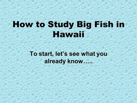How to Study Big Fish in Hawaii To start, let's see what you already know…..