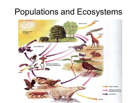 Populations and Ecosystems. Objectives To define the terms abiotic, biotic, biosphere, habitat, niche, population, community and ecosystem and to be able.