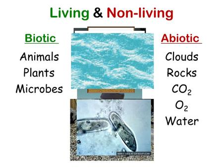 Living & Non-living BioticAbiotic Animals Plants Microbes Clouds Rocks CO 2 O2O2 Water.