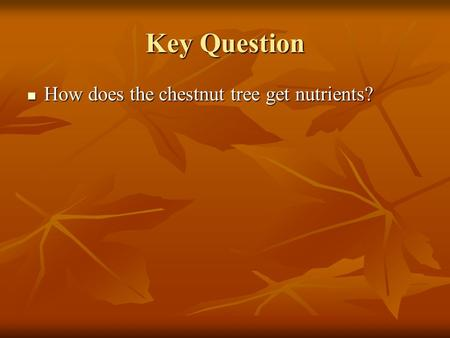 Key Question How does the chestnut tree get nutrients? How does the chestnut tree get nutrients?