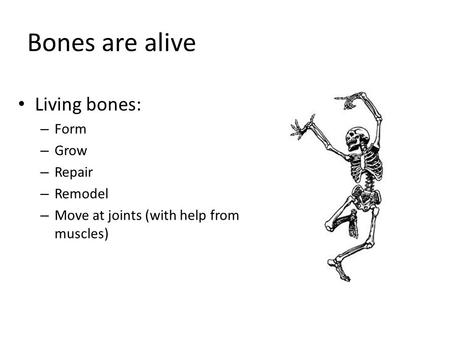 Bones are alive Living bones: – Form – Grow – Repair – Remodel – Move at joints (with help from muscles)