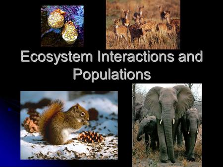 Ecosystem Interactions and Populations. Interactions and Populations All populations of species in an ecosystem strive for survival All populations of.