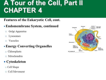 A Tour of the Cell, Part II CHAPTER 4 Features of the Eukaryotic Cell, cont.  Endomembrane System, continued o Golgi Apparatus o Lysosomes o Vacuoles.