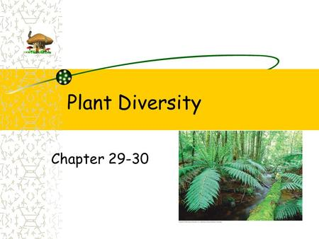 Plant Diversity Chapter 29-30. Evolution Evolved from green algae ancestor Charophytes (green algae) Closest plant relative Over 470 million years ago.