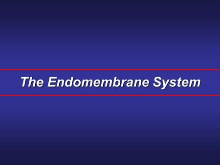 The Endomembrane System. A series of membranes found in the interior of a eukaryotic cell. It divides the cell into compartments, channels the passage.