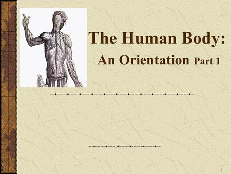 1 The Human Body: An Orientation Part 1. 2 Anatomy Ana- (apart) -tomy (to cut) The study of internal & external structures of the body and the physical.