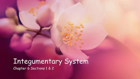 Integumentary SystemIntegumentary System Chapter 6 Sections 1 & 2Chapter 6 Sections 1 & 2.