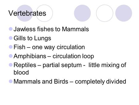 Vertebrates Jawless fishes to Mammals Gills to Lungs Fish – one way circulation Amphibians – circulation loop Reptiles – partial septum - little mixing.