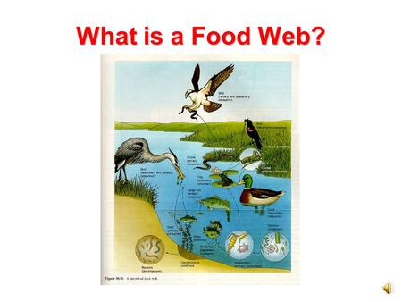 What is a Food Web? Food chains show how energy is passed from the Sun to producers, consumers, and decomposers. In any ecosystem many food chains overlap.