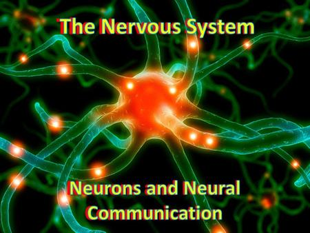 The Nervous System Our nervous system is involved in thinking, dreaming, feeling, moving, sleeping, and more Regulates internal functions When we learn.