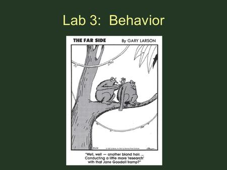 Lab 3: Behavior. Objectives Become familiar with methods of collecting behavior data Develop hypotheses and predictions Collect and analyze data Practice.