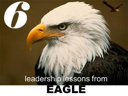 Leadership lessons from EAGLE 6 6. EAGLES FLY WITH EAGLES eagles fly alone at a high altitude and not with sparrows or other small birds like geese. birds.