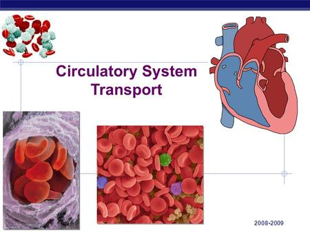 Regents Biology 2008-2009 Circulatory System Transport.