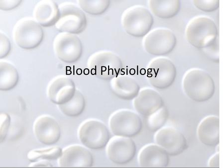 Blood Physiology. Hematopoiesis Blood cell formation Occurs in red marrow – Flat bones – Skull – Pelvis – Ribs – Sternum Lymphocytes that form T cells.