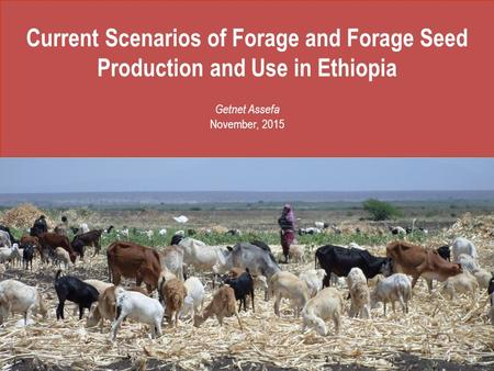 Current Scenarios of Forage and Forage Seed Production and Use in Ethiopia Getnet Assefa November, 2015.