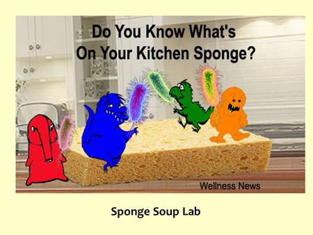 Sponge Soup Lab. Background Antibiotic or disinfectant discs are often used to determine if a particular bacterium is susceptible to a type of antibiotic.