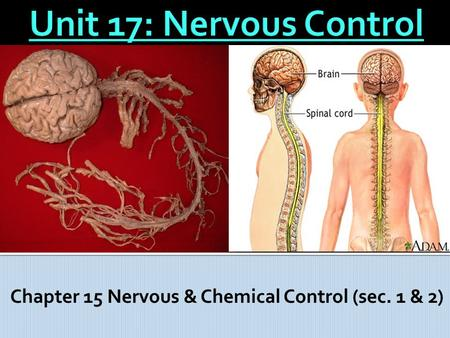 Chapter 15 Nervous & Chemical Control (sec. 1 & 2)