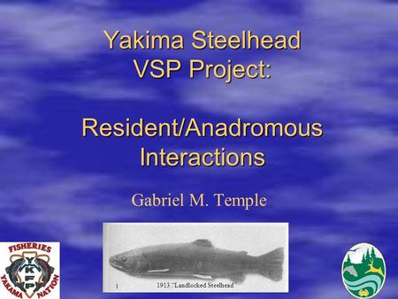 "Yakima Steelhead VSP Project: Resident/Anadromous Interactions Gabriel M. Temple 1913 ""Landlocked Steelhead"""
