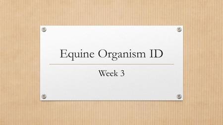 Equine Organism ID Week 3. Equine Infectious Anemia (EIA) AKA: Swamp Fever Classification: Viral (Horse and deer flies)