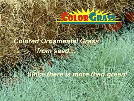 Colored Ornamental Grass from seed…