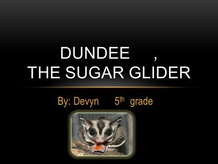 By: Devyn 5 th grade DUNDEE, THE SUGAR GLIDER. WHERE ARE SUGAR GLIDERS FROM ?