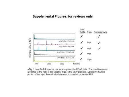 Supplemental Figures, for reviews only. MNV RdRp RNA Formadehyde MNV RdRp+ PS, X-link MNV RdRp+ Hp, X-link MNV RdRp+ PS, no X-link MNV RdRp+ Hp, no X-link.