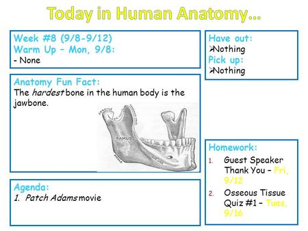 Today in Human Anatomy…