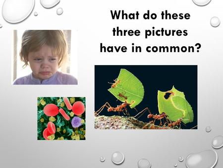 What do these three pictures have in common?. 11.1: ANTIBODY PRODUCTION & VACCINATION.