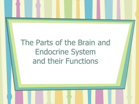 The Parts of the Brain and Endocrine System and their Functions.