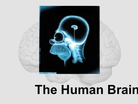 The Human Brain. Cerebrum - The largest division of the brain. It is divided into two hemispheres, each of which is divided into four lobes. -Makes up.