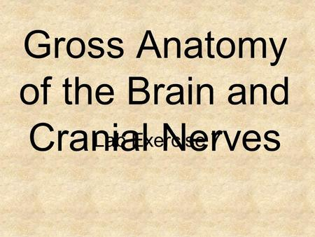 Gross Anatomy of the Brain and Cranial Nerves Lab Exercise 7.