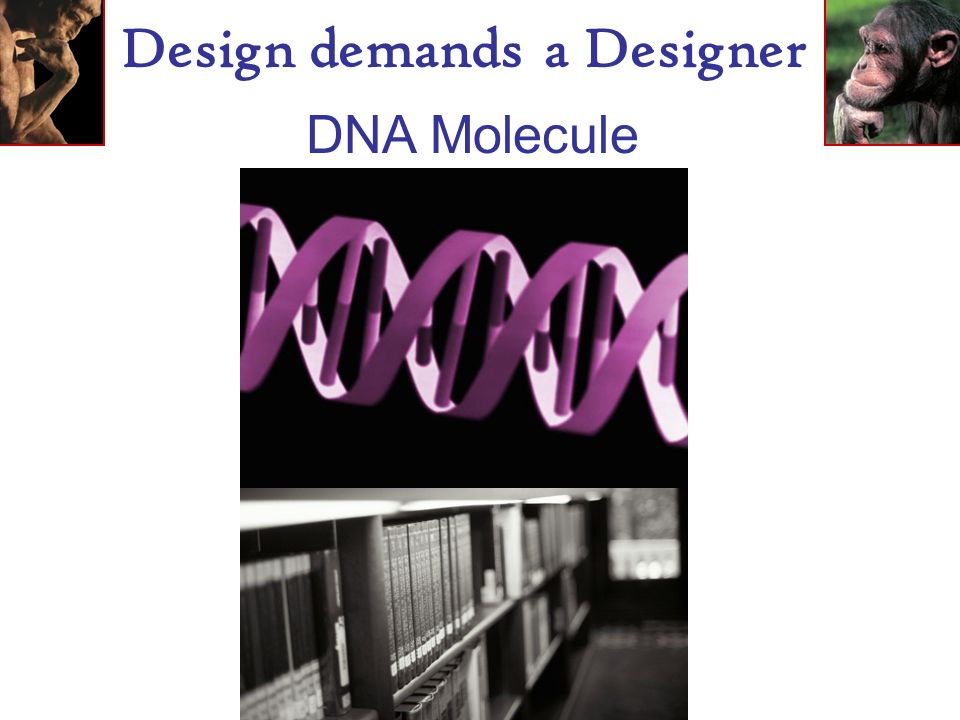 Design demands a Designer Biology is the study of complicated things that give the appearance of having been designed for a purpose.