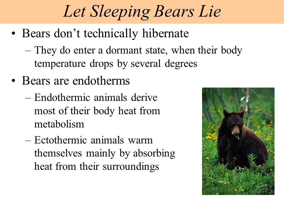 Dormant bears have internal homeostatic mechanisms that compensate for fluctuations in the external environment –Thermoregulation maintains the body temperature within a tolerable range –Osmoregulation controls the gain and loss of water and dissolved solutes –Excretion is the disposal of metabolic wastes