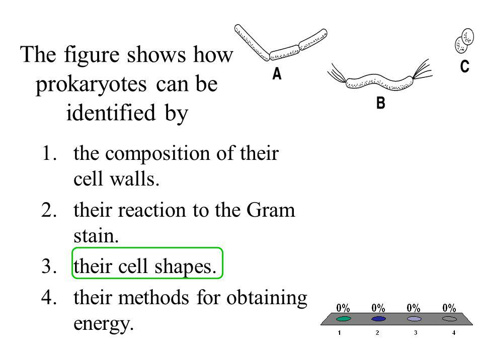 Which cell shape in the figure is called a coccus? 1.A 2.B 3.C 4.none of the above