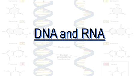 DNA and RNA. What do all of these organisms have in common? They all share a universal genetic code.