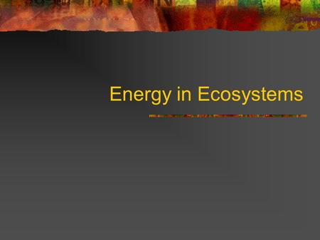 Energy in Ecosystems ALL LIVING THINGS USE ENERGY The earth is SOLAR POWERED! The source of all energy for ecosystems is the Sun.