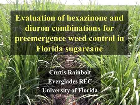 Evaluation of hexazinone and diuron combinations for preemergence weed control in Florida sugarcane Curtis Rainbolt Everglades REC University of Florida.