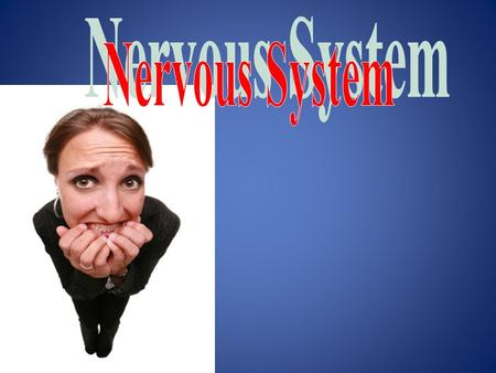3 Functions of the Nervous System (SIM) 1. Sensory input—gathering information – monitor changes inside and outside the body – changes = stimuli – sensory.