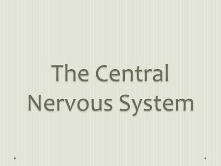 The Central Nervous System. The CNS coordinates the activities that go on within the body. It also processes and analyzes the information brought in by.