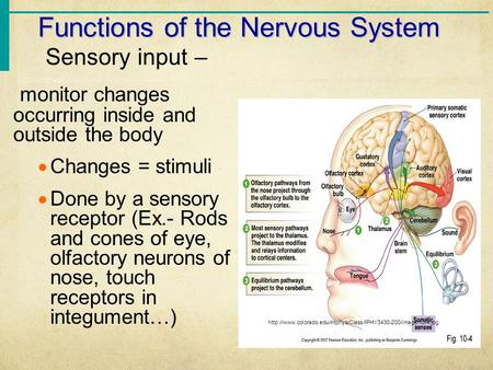 Functions of the Nervous System Sensory input – monitor changes occurring inside and outside the body  Changes = stimuli  Done by a sensory receptor.
