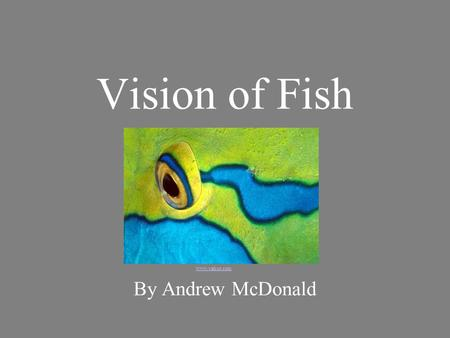 Vision of Fish www.yahoo.com By Andrew McDonald.