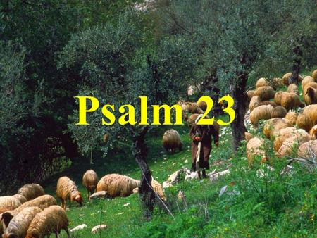 Psalm 23. The Lord is my shepherd, I have. everything I need.