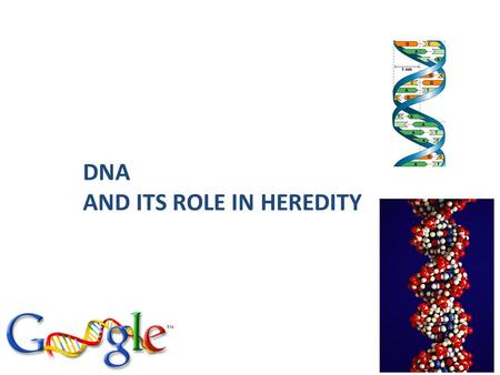 2006-2007 DNA AND ITS ROLE IN HEREDITY DNA is the genetic material: a short history - DNA was found in the nucleus by Miescher (1868) Early in the 20th.
