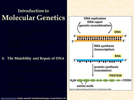 1.Structures and Functions of Nucleic Acids 2.Organization and Content of Genomes 3.DNA Replication 4.The Mutability and Repair of DNA 5.DNA Recombination.
