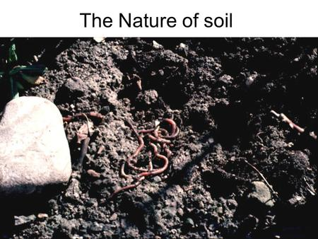 The Nature of soil. Dirt is what you find under your fingernails. Soil is what you find under your feet. Think of soil as a thin living skin that covers.