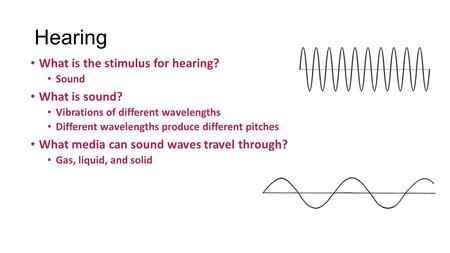 Hearing What is the stimulus for hearing? Sound What is sound? Vibrations of different wavelengths Different wavelengths produce different pitches What.