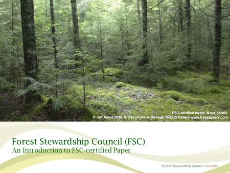 Forest Stewardship Council (FSC) An Introduction to FSC-certified Paper FSC-certified forest -Nova Scotia. © Jeff Amos 2006. Prints available through TREES.