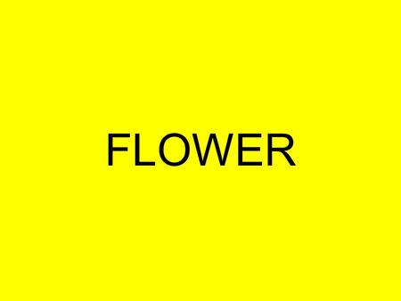 FLOWER. Flower Anatomy (cont.) Stamen – The male part of a flower Filament - stalk like holds up anther Anther.- contains pollen which is grain released.